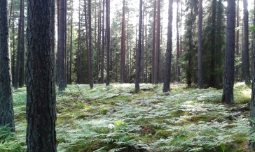 Forest near Nyköping, Sweden.